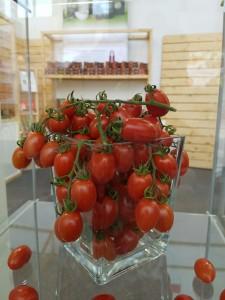 Keuthmann Fruit Logistica (12)